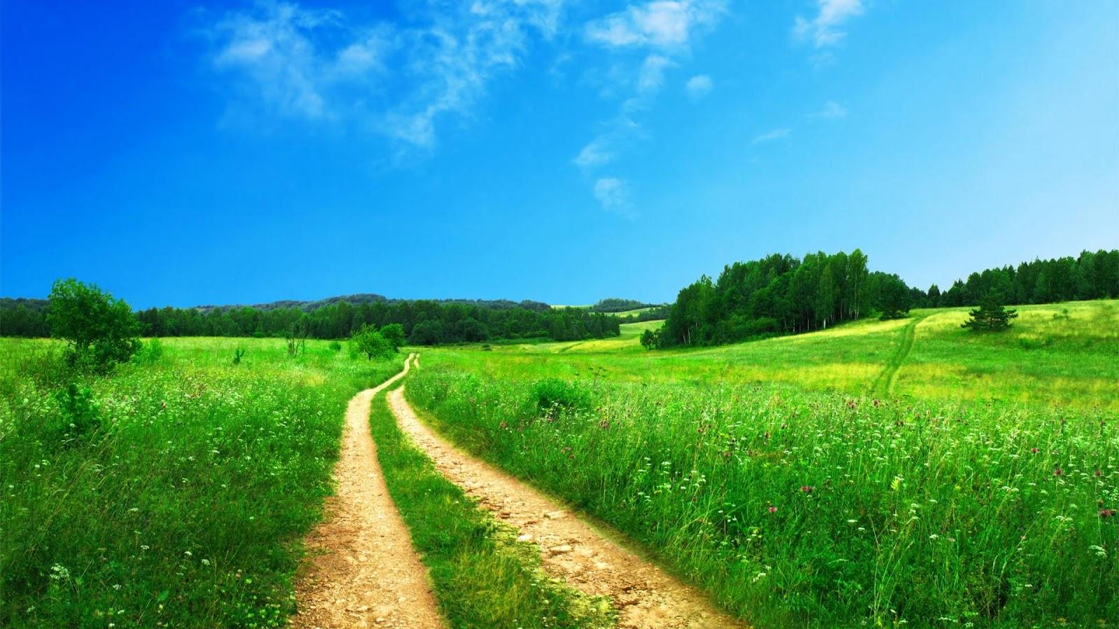 Le-chemin-de-la-vie1.jpg
