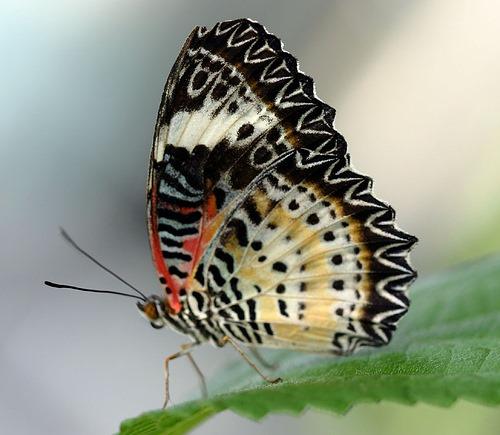 transformer-le-stress-comme-un-papillon.jpg