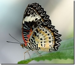 transformer le stress comme un papillon