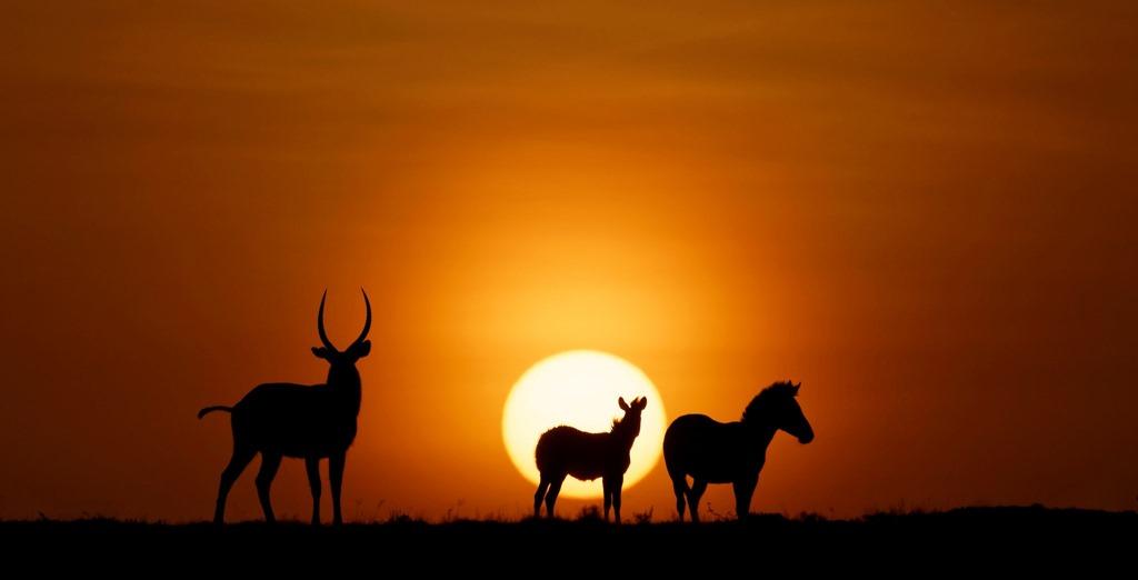 Kenya-Lever-de-soleil.jpg
