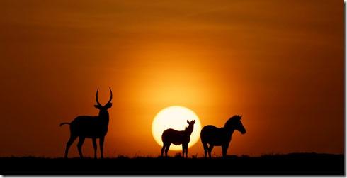 Kenya-Lever de soleil