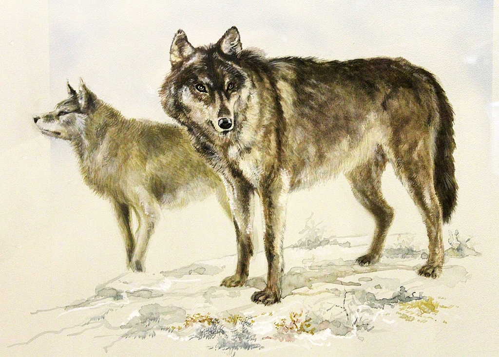 Loups-intrieurs.jpg