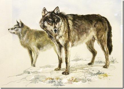 Loups intérieurs